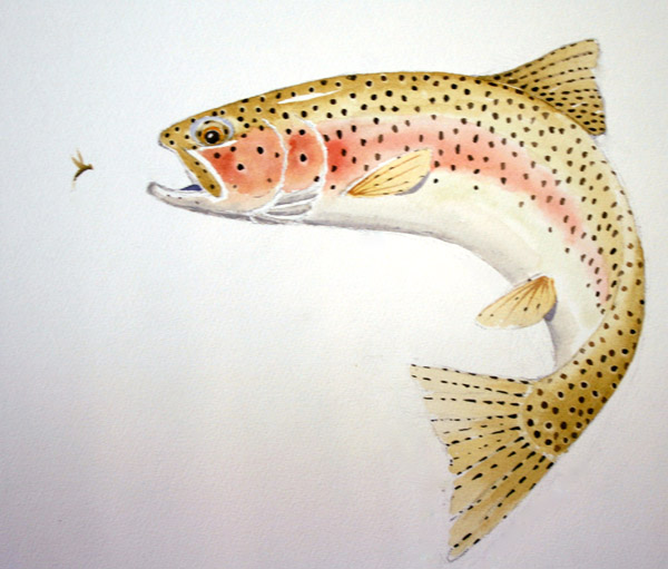 8675_artwork_trout_tom_sutcliffe_4
