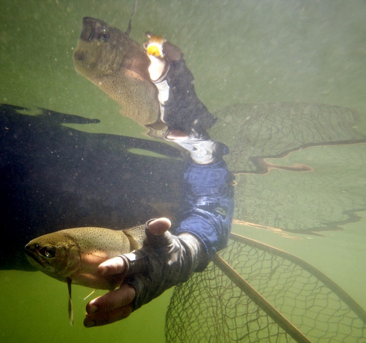 Underwater_trout_release_IMG_9906