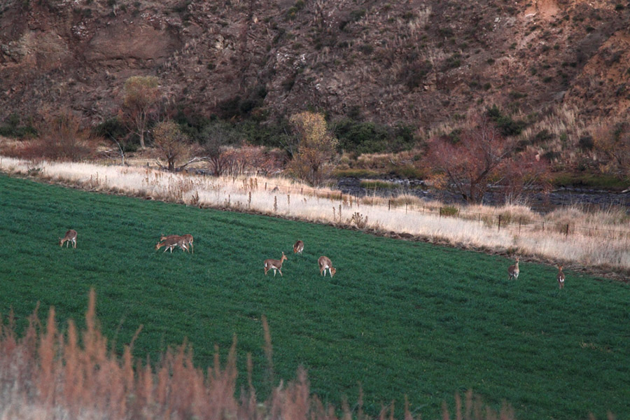 9 Mountain Reedbuck Kraai River