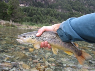 13 wild Brown on the Rio Correntoso