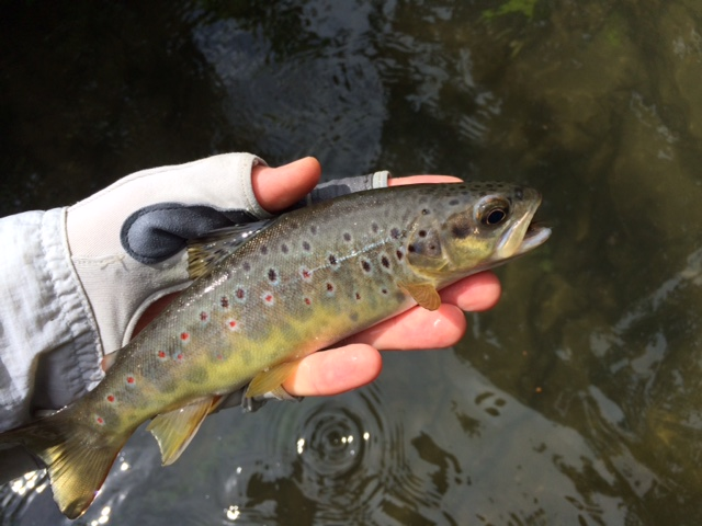 B3 River Avon Brownie2
