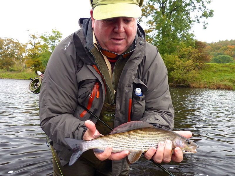 5 Grayling fight 5