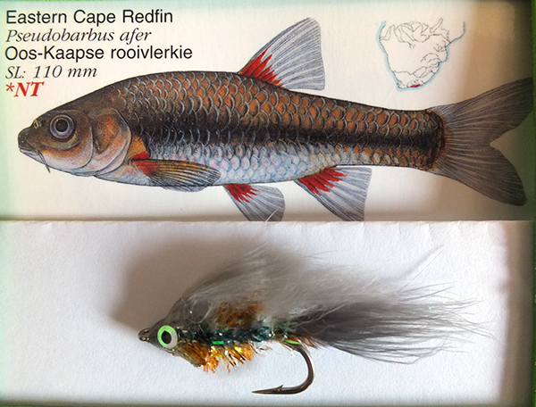 Photo 7 Eastern Cape Redfin