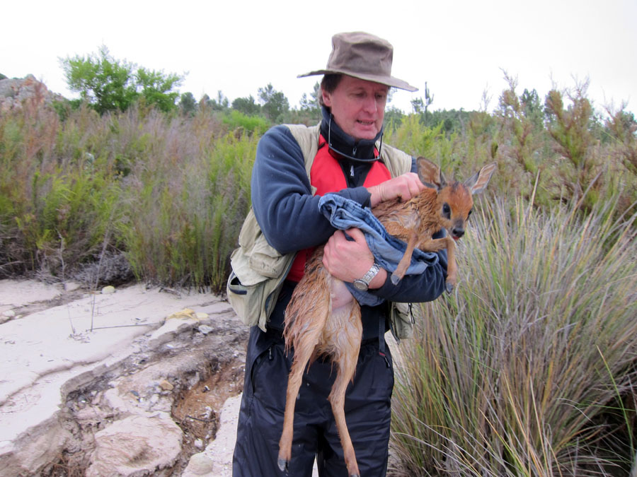 Cape Grysbok saved 9
