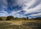 Landscape Karoo Steynsberg2 (7)