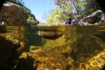 Underwater fly fishing photography (13)
