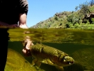 Underwater fly fishing photography (7)