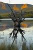 Lone tree Birkhall