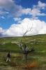 Lone tree Carabas
