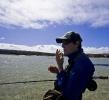 Sand shark essay (100)