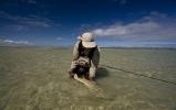 Sand shark essay (86)