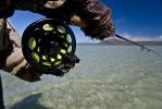 Sand shark essay (87)
