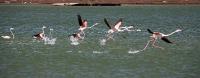 Sand shark essay (88c)