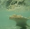 Sand shark essay (94a)