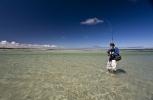 Sand shark essay (96)