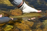 SMALBLAAR - PRINCE OF DRY FLY STREAMS