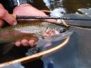 Stillwater Fly Fishing Scenes