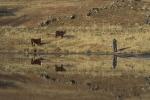Reflections Owl Dam - Billy de Jong