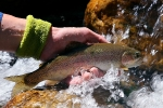 TROUT TAPESTRIES