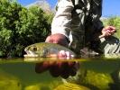 trout 12 (11)
