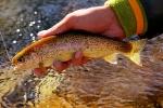 trout 12 (5)