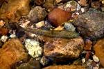 trout 12 (8)