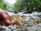 trout 12 (9)