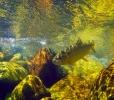 underwater trout (20)