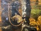 underwater trout (21)
