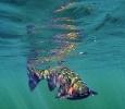 underwater trout (23)
