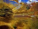 underwater trout (3)