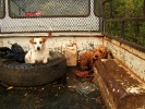 Vrederus Oom John Jordaan's dogs (14)