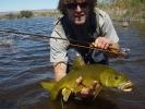 Yellowfish (2)