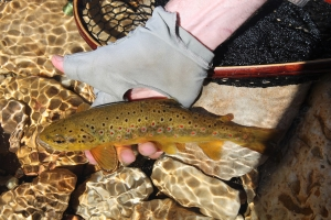 Extracts from my 2 November 2014 Fly Fishing Newsletter