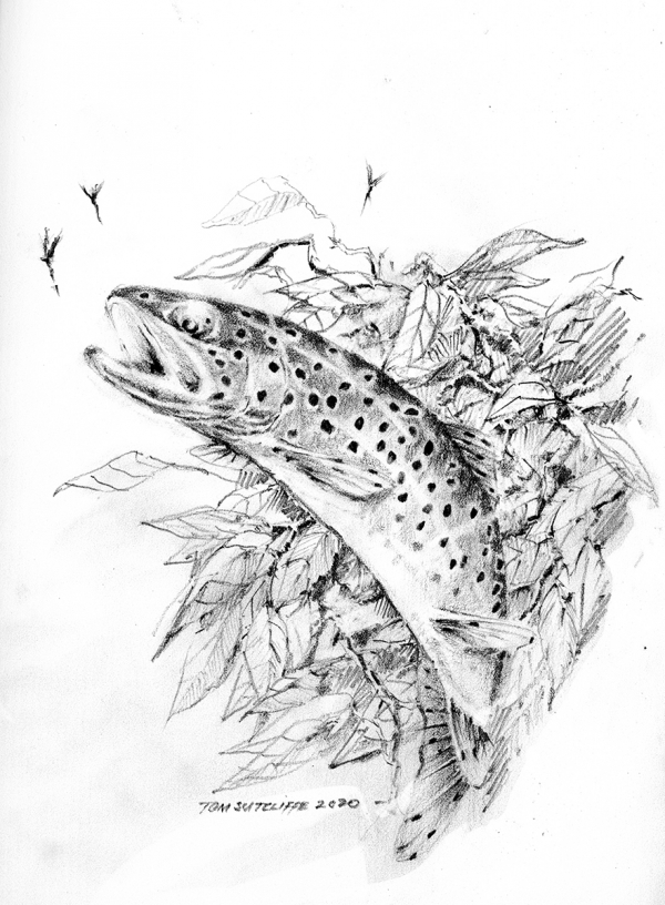 Brown trout against bankside leaves - available