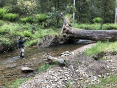 HUNTING SMALL STREAM TROUT IN AUSTRALIA