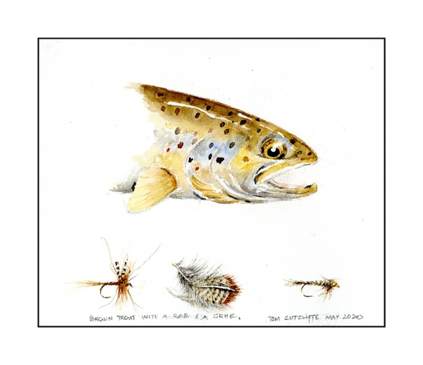 Profile brown trout 20 x 24 Available