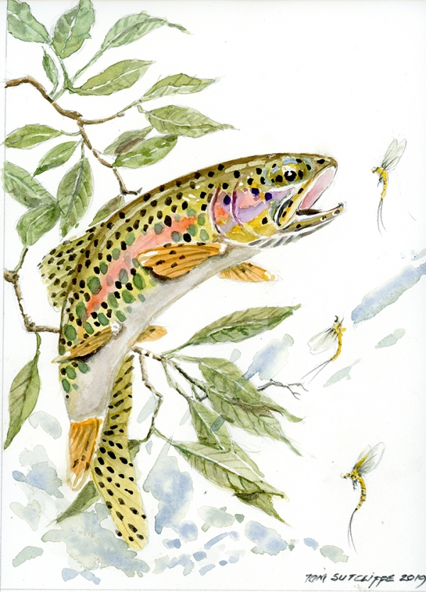 Trout against branches