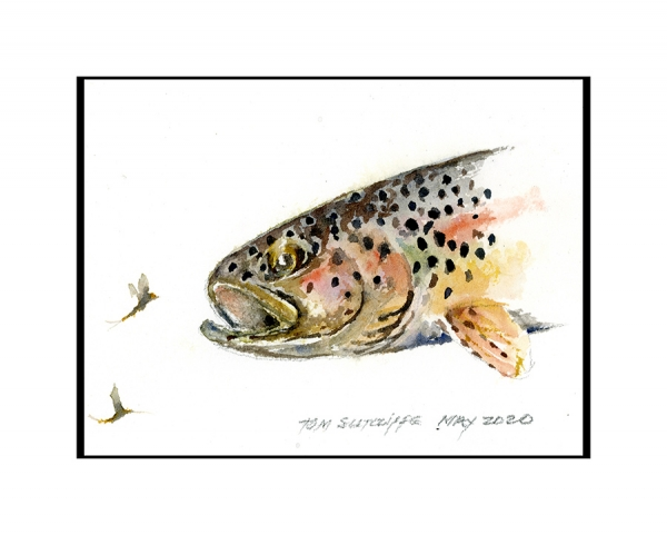 Brown trout with mayflies 18 x 13