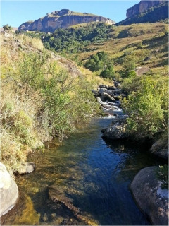 THE MAHAI IS A LITTLE FISHED TROUT STREAM IN THE NORTHERN DRAKENSBERG. MUNGO POORE WONDERS IF THIS MAYBE IS WHY SOME OF ITS FISH GET SO BIG.
