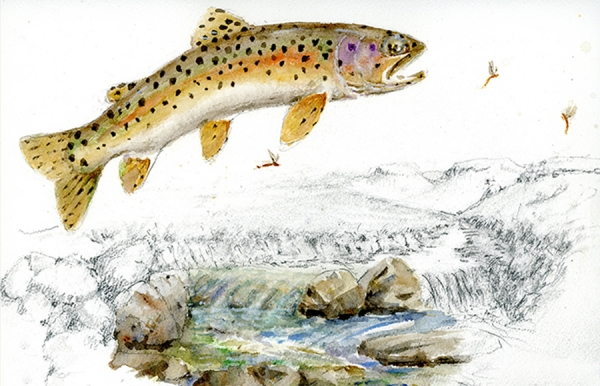 Trout on the source of the Bokspruit River