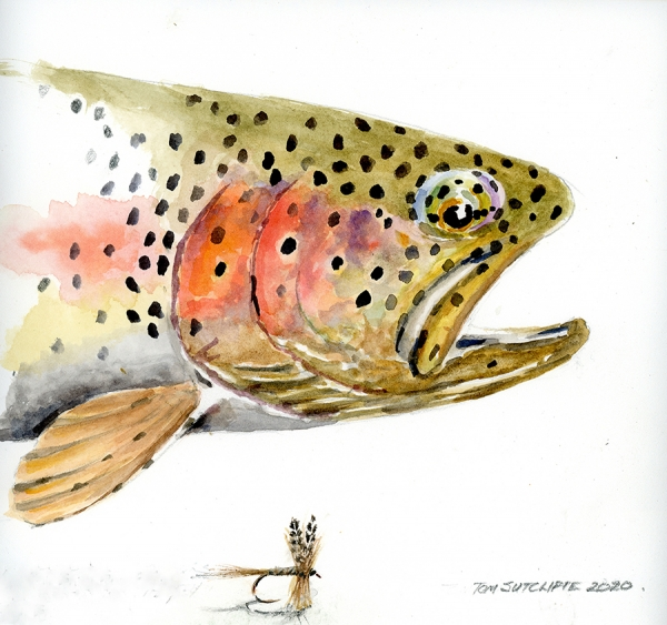 Head of a rainbow trout