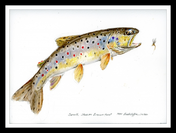Leaping brown trout