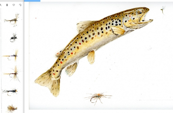 Leaping brown and trout flies 40 x 28 Available