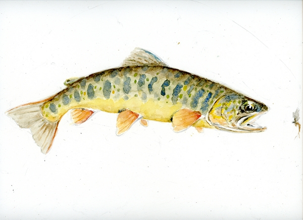 White spotted char