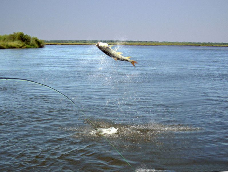 Fly_Fishing_the_Okavango_Delta_25