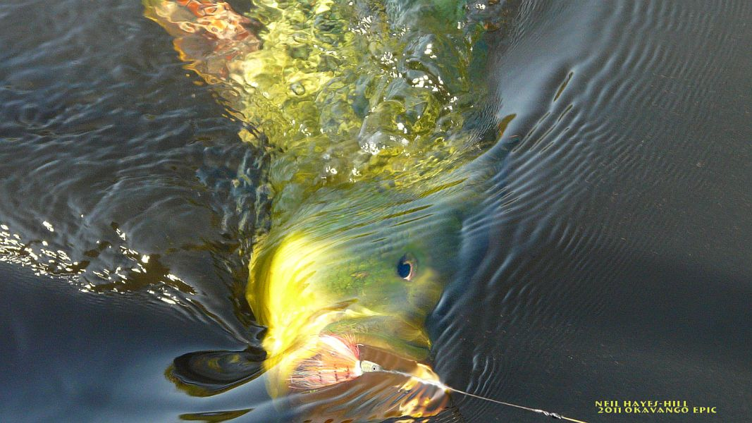 Fly_Fishing_the_Okavango_Delta_5